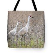 Sandhill Crane Stroll, Antigone Canadensis Tote Bag