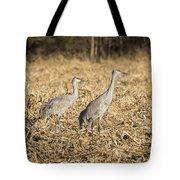 Sandhill Cranes  2015-2 Tote Bag