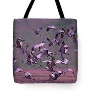 Sandhill Cranes  Tote Bag by Jeff Swan