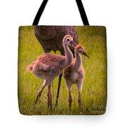Sandhill Cranes Playing Tote Bag