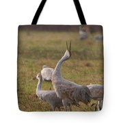 Sandhill Delight Tote Bag