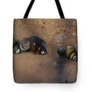 Sandy Shells Tote Bag