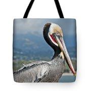Santa Barbara Brown Pelican Tote Bag