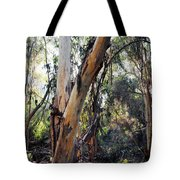 Santa Barbara Eucalyptus Forest Tote Bag