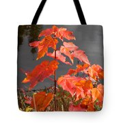 Sapling By The Pond Tote Bag