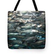 Sardines 1 Tote Bag