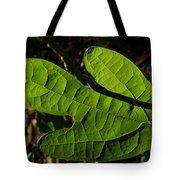 Sassafras Tote Bag