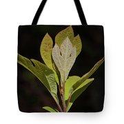 Sassafras Leaves Tote Bag