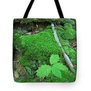 Sassy Sapling Tote Bag