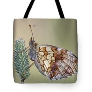 Satyr Butterfly On Blade Of Grass Tote Bag