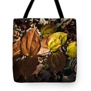 Sawbrier Or Greenbriar In The Fall Tote Bag