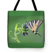 Scarce Swallowtail Tote Bag