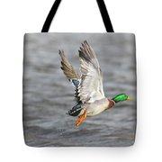 Scared Mallard Drake Tote Bag