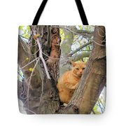 Scared Up A Tree Tote Bag