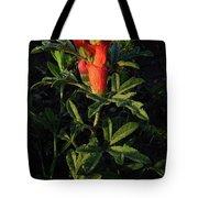 Scarlet Globemallow Tote Bag