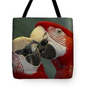 Scarlet Macaw Ara Macao Pair Kissing Tote Bag