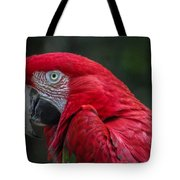 Scarlet Macaw Tote Bag by Fabio Giannini