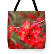 Scarlet Quince Blooms Tote Bag