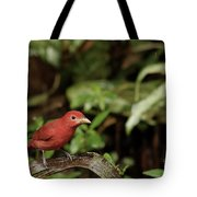 Scarlet Tanager In Costa Rica Tote Bag