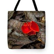 Scarlet Underfoot Tote Bag