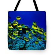 Schooling Raccoon Tote Bag