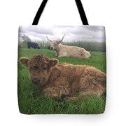 Scottish Highland Calf Tote Bag