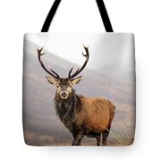 Scottish Red Deer Stag - Glencoe Tote Bag
