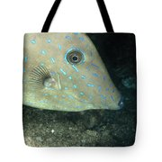 Scrawled Filefish Profile, Alutera Tote Bag