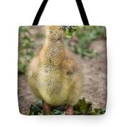 Screamer Chicking Eating His Spinach Tote Bag