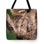 Screech Owl In Flight Tote Bag