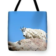 Scruffy Mountain Goat On The Mount Massive Summit Tote Bag