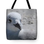 Sea Birds Sanibel Island Tote Bag