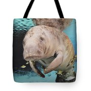 Sea Cow Swimming Underwater Tote Bag