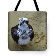 Sea Hawk Standing In Shallow Water Tote Bag