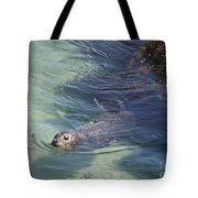 Sea Lion In Clear Blue Waters Tote Bag