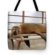 sea lion on a bench in Puerto Ayora, Santa Cruz Island, Galapagos Tote Bag