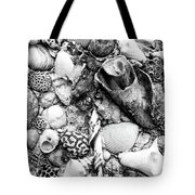 Sea Shells - Nassau, Bahamas Tote Bag