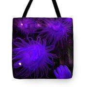 Sea Urchin 8 Tote Bag