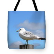 Seagull Beach Art - Sitting Pretty - Sharon Cummings Tote Bag