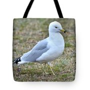 Seagull In Field Tote Bag
