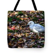 Seagull In The Fallen Leaves Tote Bag