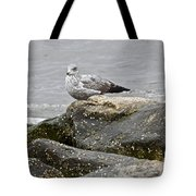 Seagull Sitting On Jetty Tote Bag