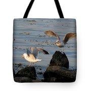 Seaguls 3 Tote Bag