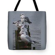 Seaguls 4 Tote Bag