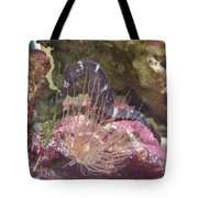 Seahorse1 Tote Bag