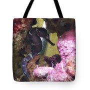 Seahorse3 Tote Bag
