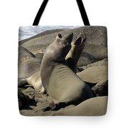 Seal Duet Tote Bag