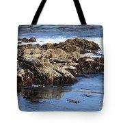 Seal Island Tote Bag