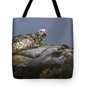 Seal Of Lover's Point Beach Tote Bag by Atul Daimari