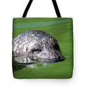 Seal Swimming Portrait Wildlife Scene Tote Bag